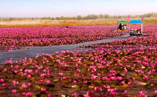 Talay Bua Dang ( Red Lotus Lake )